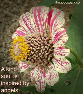 a kind soul